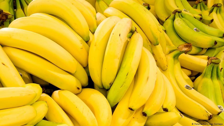 Doença pandêmica ameaça extinguir a produção de banana do mundo