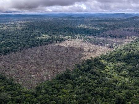 Desmatamento em áreas de preservação da Amazônia cresce 40%