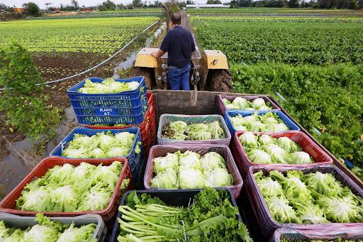 Agricultores familiares buscam recuperar renda usando a internet