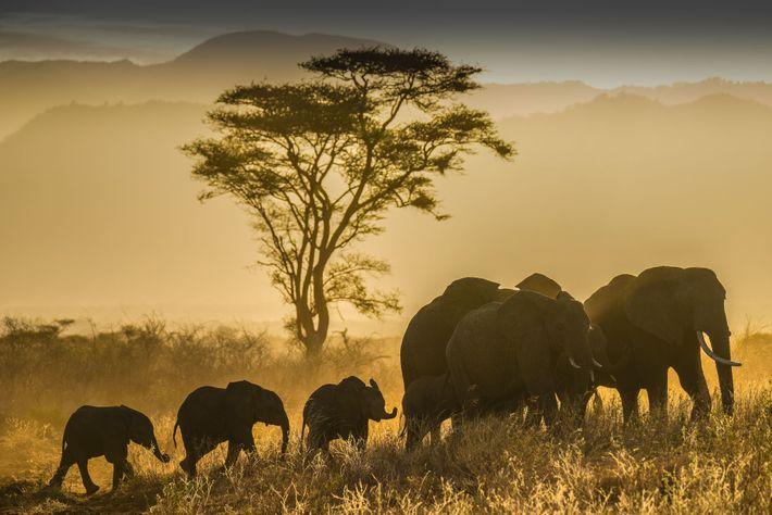 ONU propõe acordo para restaurar a biodiversidade